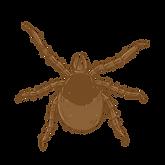 Illustration_1000x1000_tique_larve.png