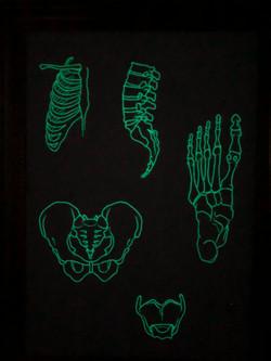 骨-bone-