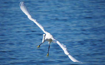 Democrats Urge Interior Department to Reverse Policy That Threatens Migratory Birds