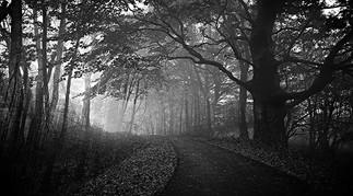 woods8.jpg