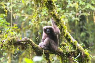 Mongabay and the 20 Most Interesting New Species Discovered Last Year