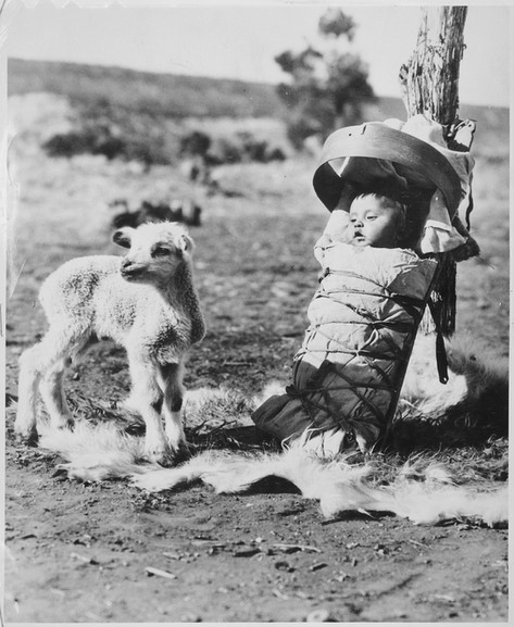 Navajo papoose on a cradleboard with a lamb approaching, Window Rock, Arizona, 1936