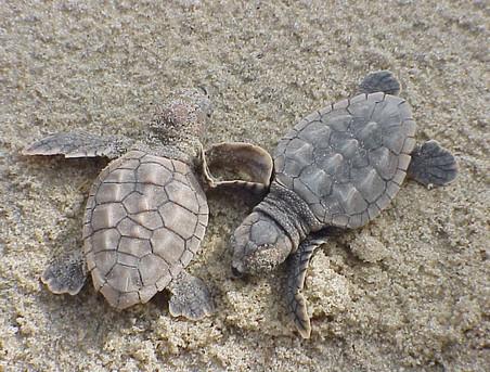 turtles2.jpg