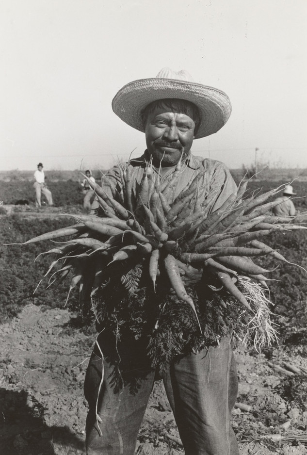 Mexican carrot worker, Edinburg, Texas. 1939