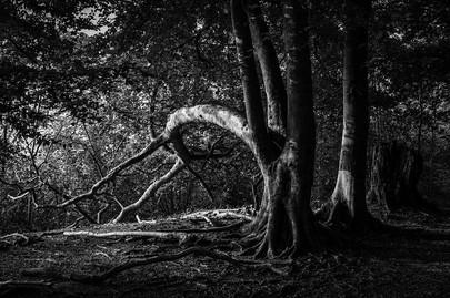 woods5.jpg