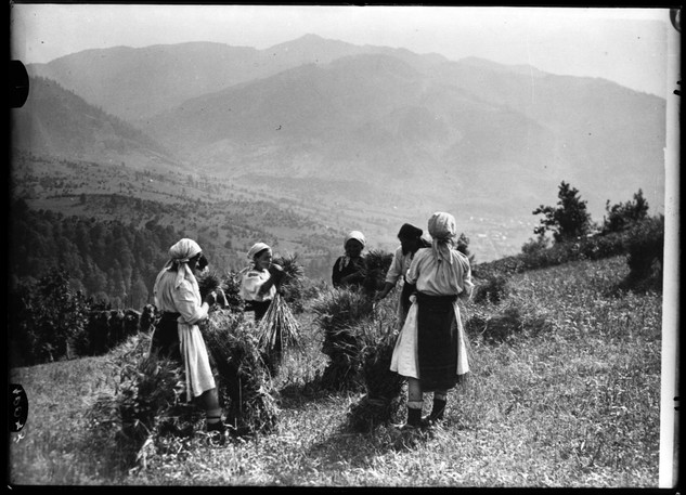 picking_hemp in Romania, c1930