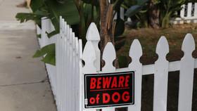 Dog Attack in South Carolina