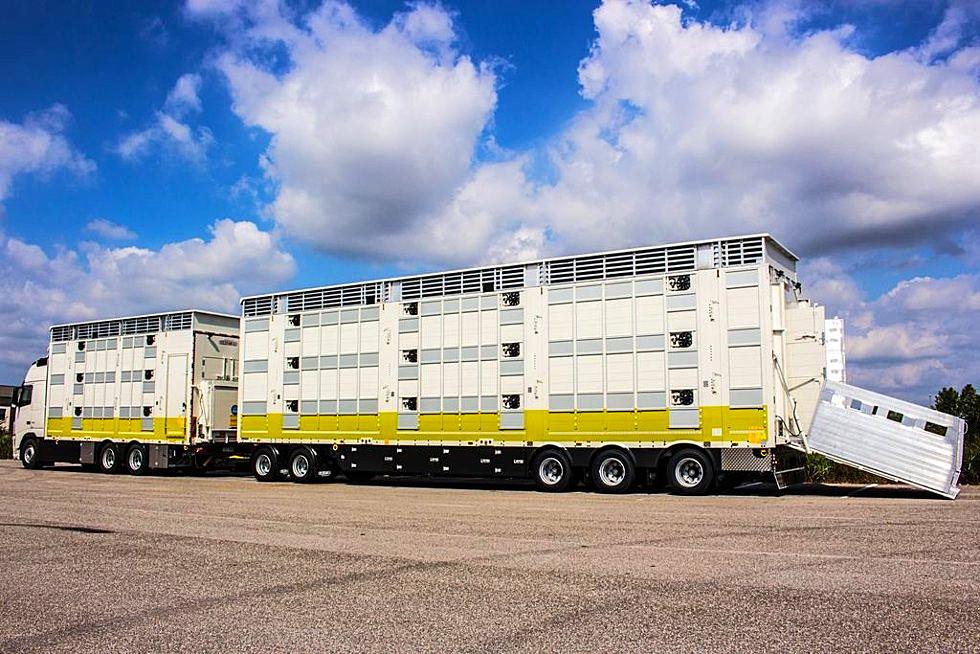 Carrozzeria Pezzaioli e ArgoPro Asset per migliorare il trasporto animali