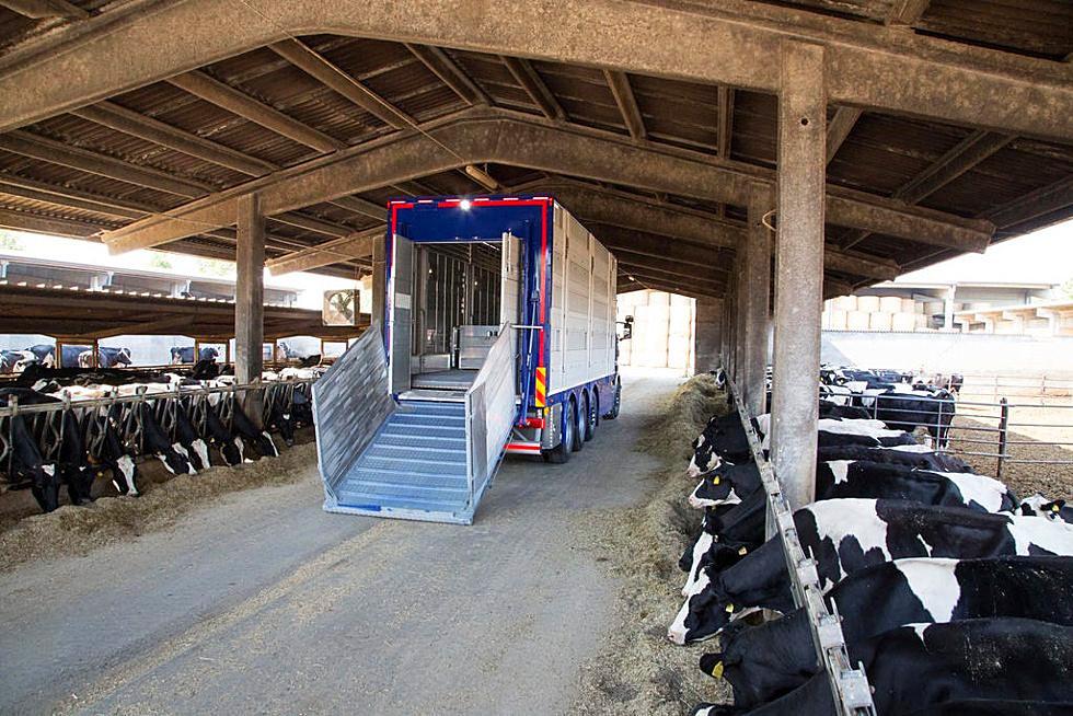 Veicolo adibito al trasporto del bestiame