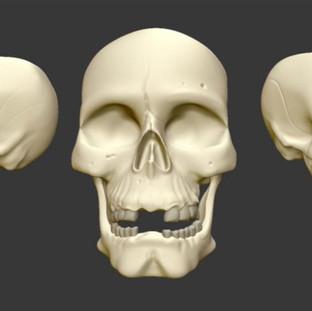 Zbrush Skull Study