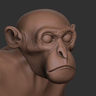 Gibbon Detail