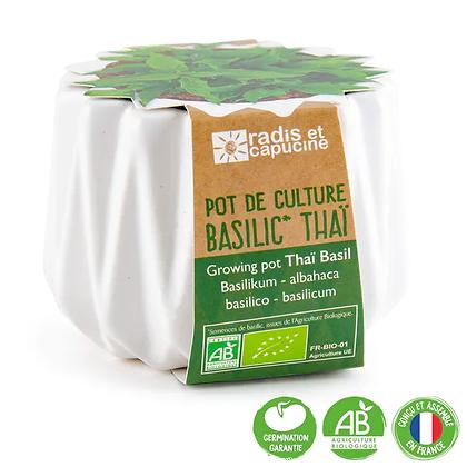 Pot Origami - Basilic Thaï BIO