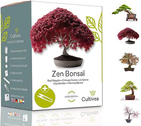 Mini Kit Prêt À Pousser Zen Bonsai