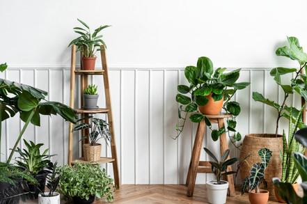 indoor-houseplants-in-corner-on-parquet-floor.jpg