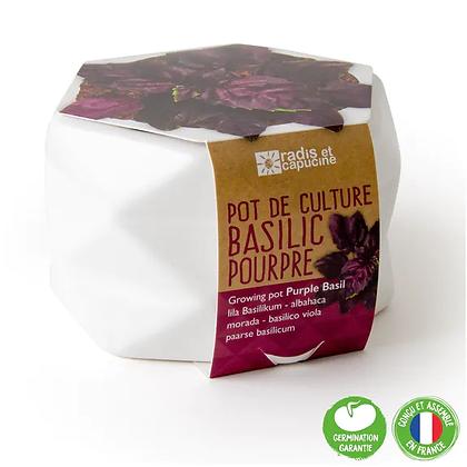 Pot Origami - Basilic Pourpre