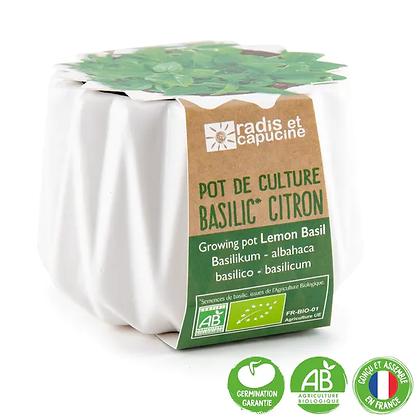 Pot Origami - Basilic Citron BIO