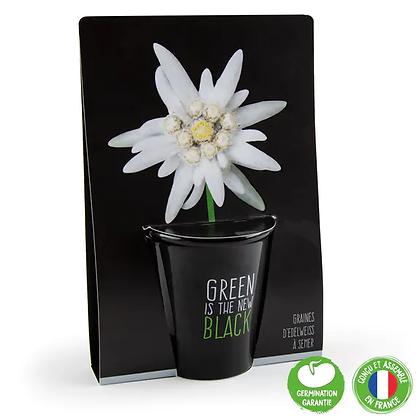 Pot Black - Edelweiss