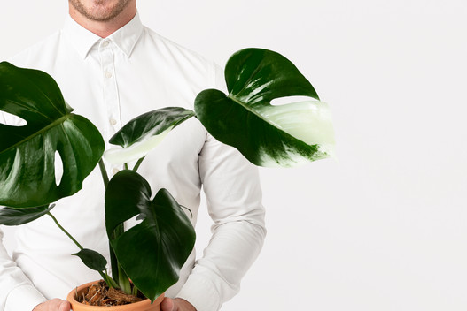 businessman-holding-potted-plan-sustainable-business-solution.jpg