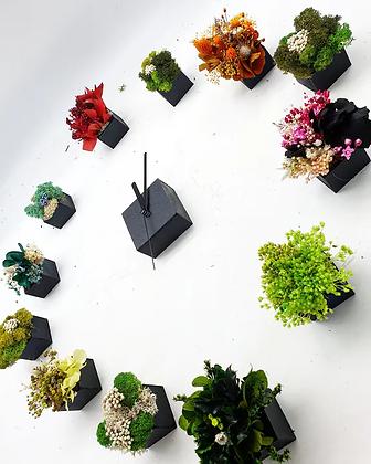Horloge Végétale Stabilisée
