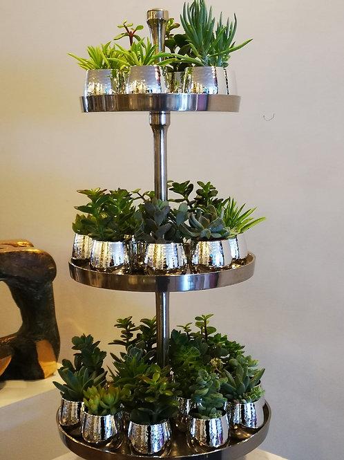 Succulente in vasetti d'argento