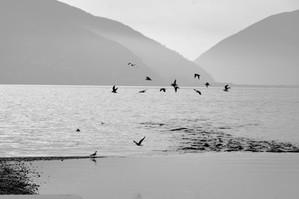 Birds at the Delta, Lugano