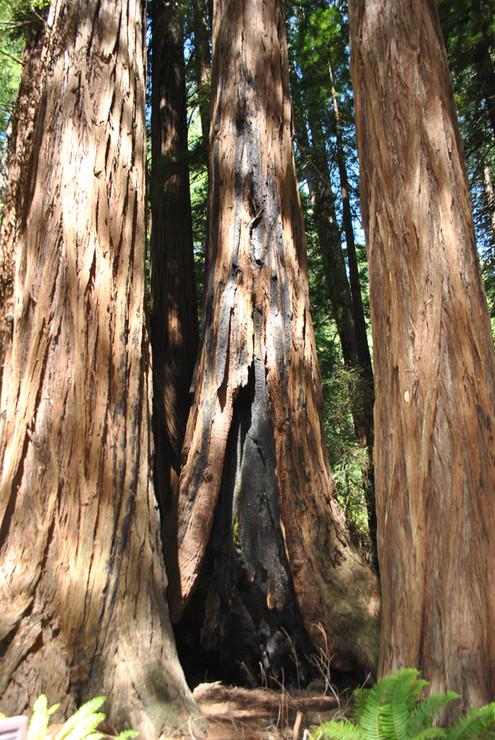 The Great Sequoias, California, USA