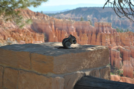 Squirrel at Bryce Kanyon