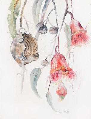 eucalyptus_silver_princess_4_Jenny Coker
