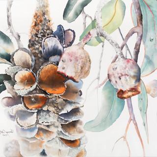 Banksia & Friends (POA)