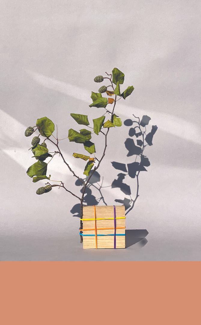 Mondrian végétal