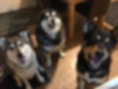 Sarah dogs