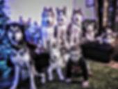 Ali dogs and Rowan