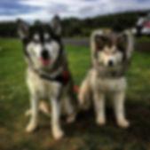 Paul Dogs