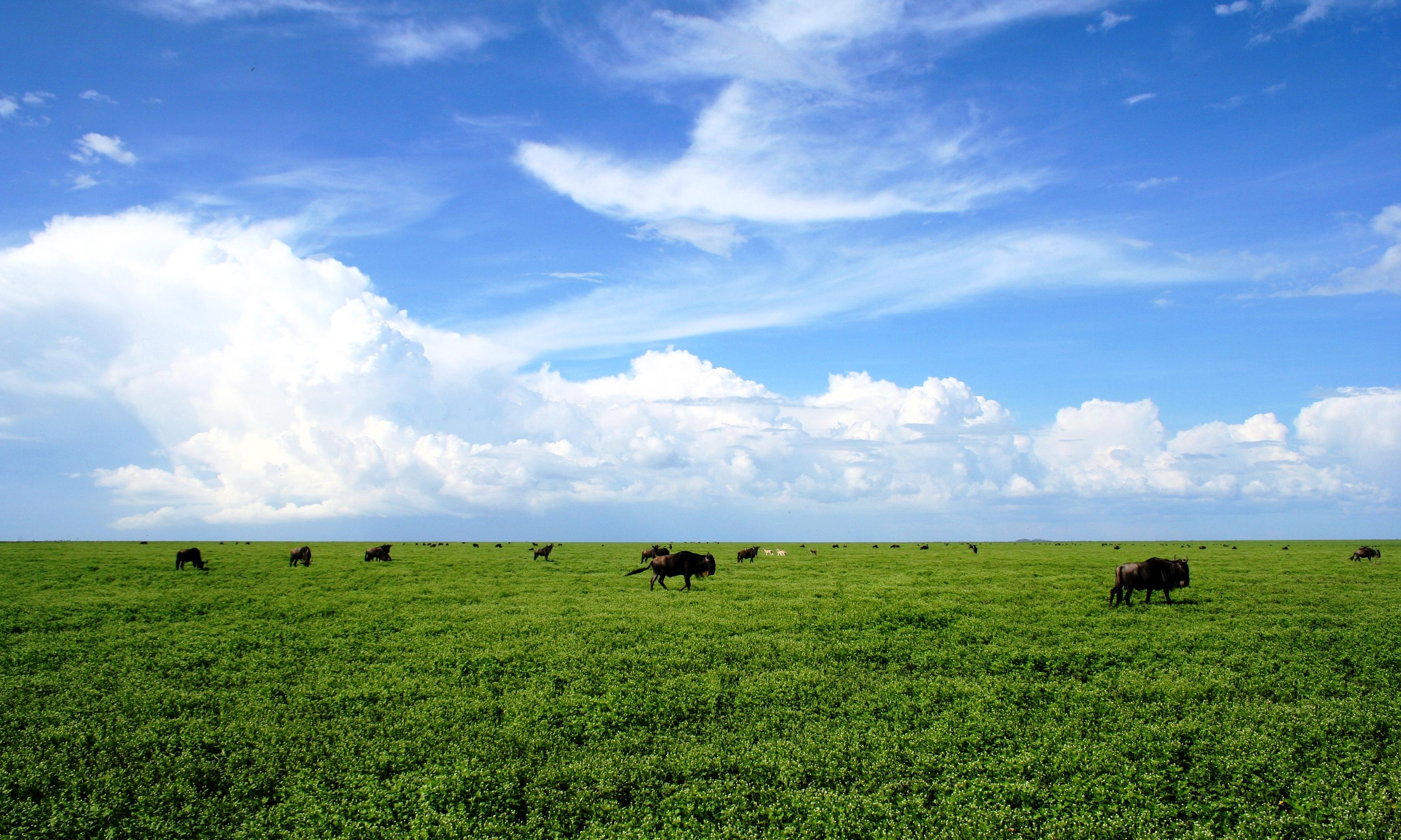 Ubuntu-South-Migration-green-grass