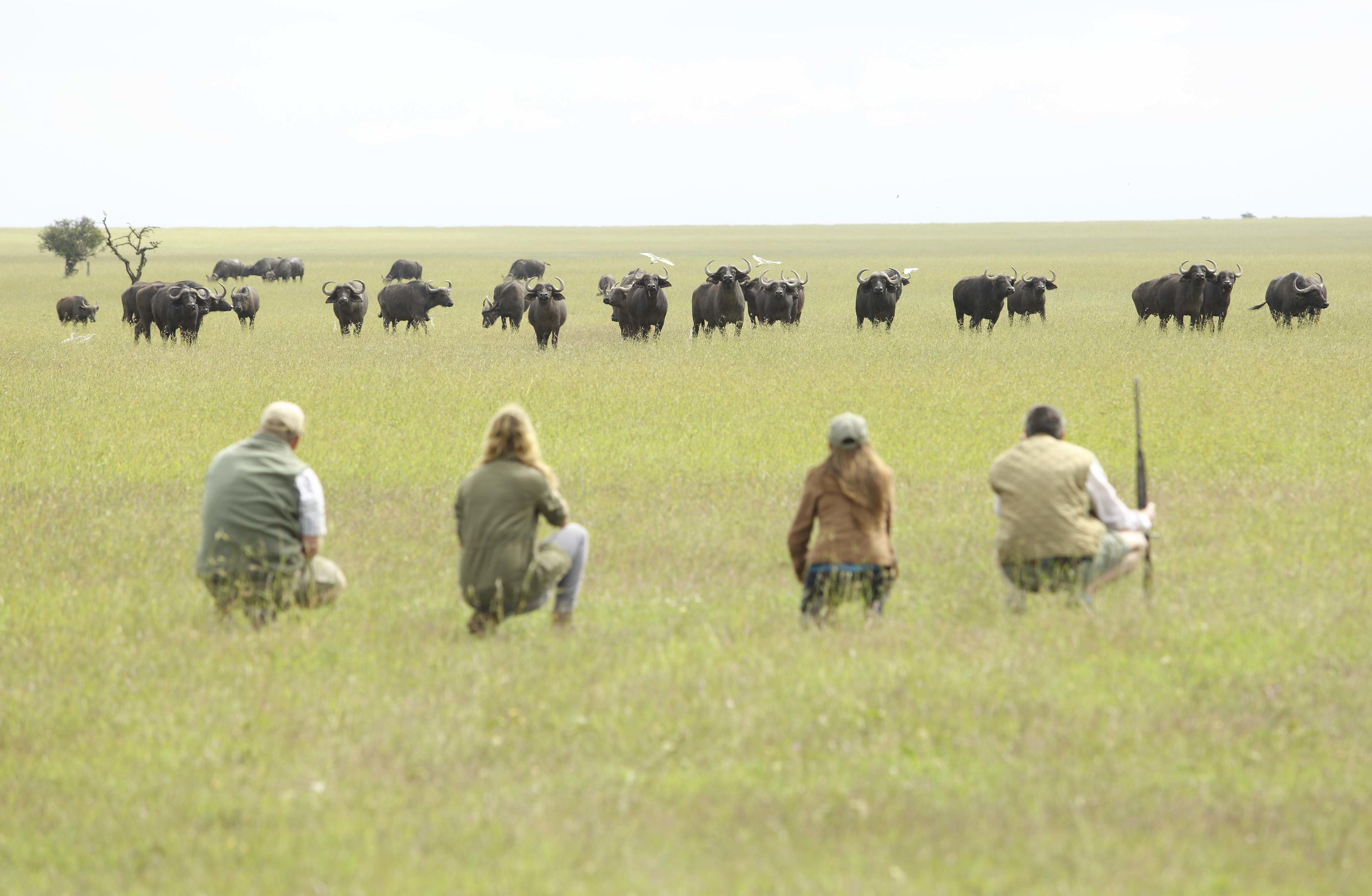 opbc-walking-safari-wildebeest
