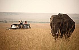 rekero-camp-game-drive-elephant-2.jpg