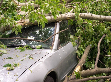 DOES YOUR CAR INSURANCE POLICY COVER COLLISIONS WITH TREES?