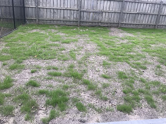 The Grass Is Growing.jpg
