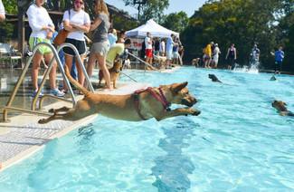 Piedmont Pool