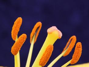 Du pollen pour recharger ses batteries