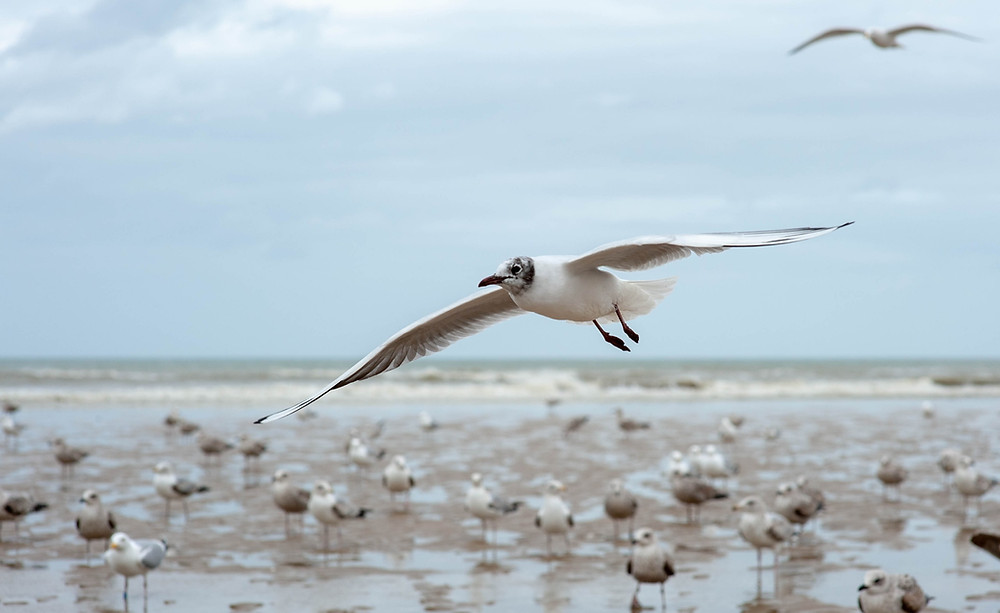 seagulls-fly-above-mud-flats