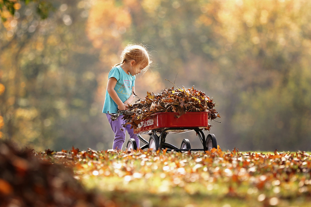 little-girl-with-red-wagon-full-of-fall-leaves
