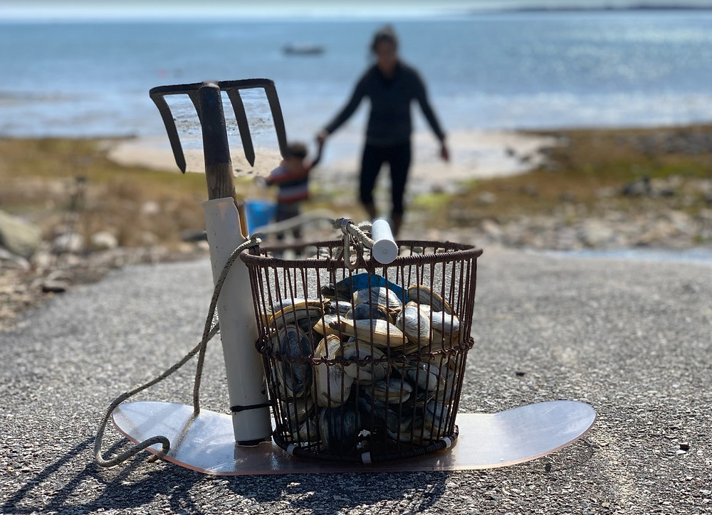 man-little-boy-walk-up-from-beach-clamming-bucket-in-forefront
