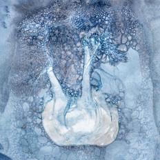 Fennel Cyanotype