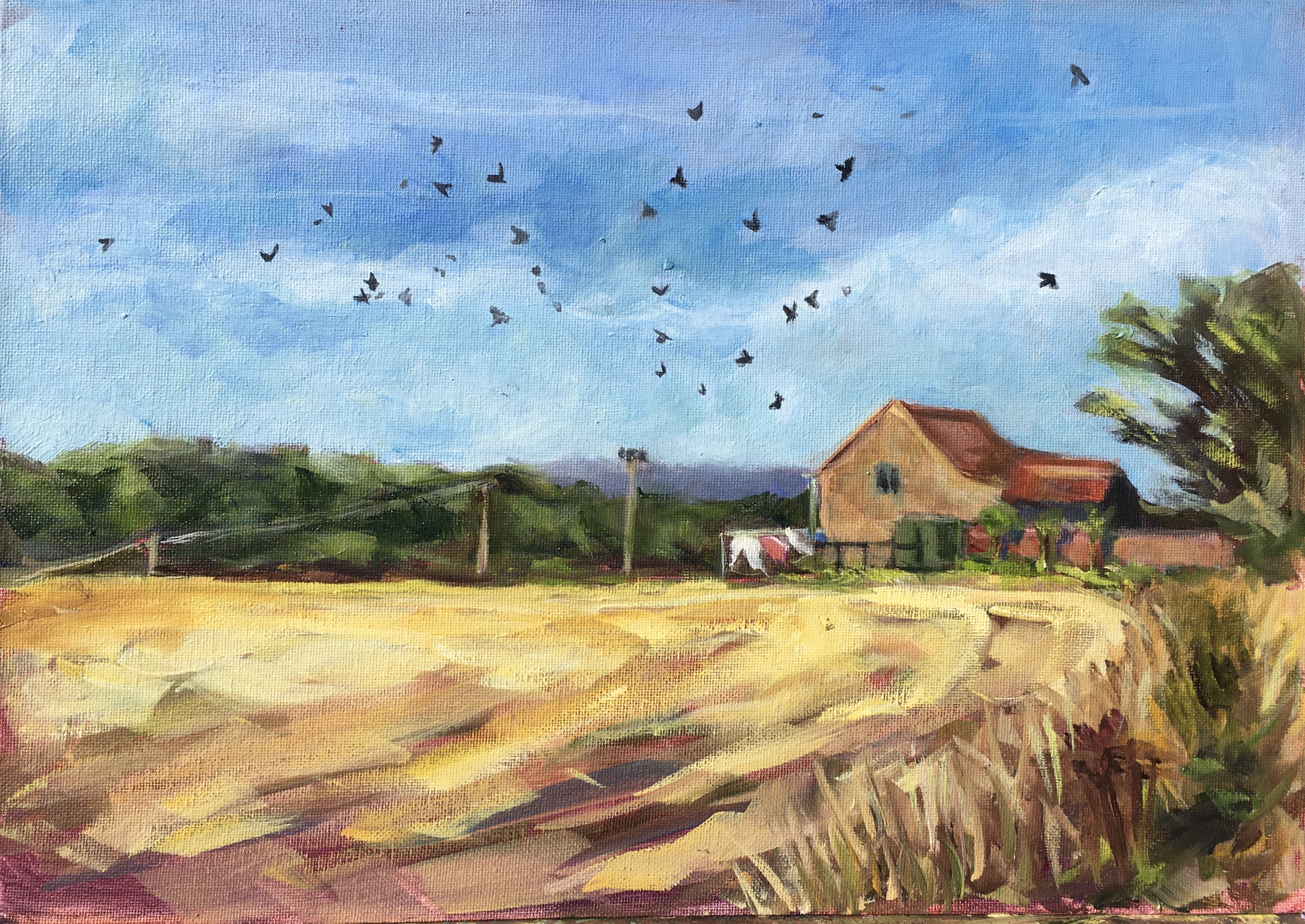 Suffolk Fields with crows