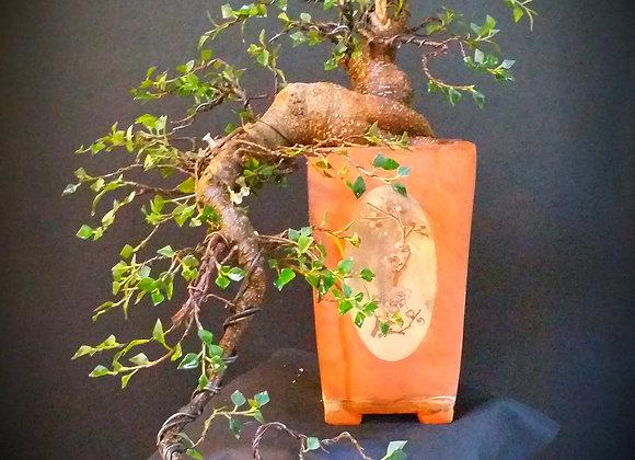 Cascade ficus retusa(very old large)