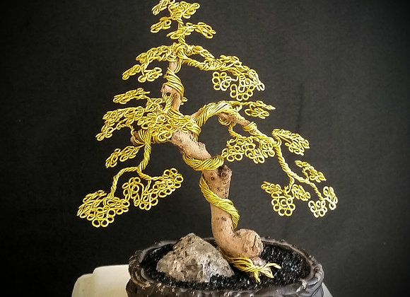 #96 Forever Tree Fukien Sculpture