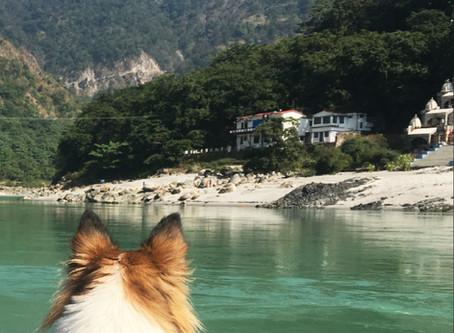 A Yogi Dog in awe of Ganga