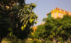 Yoga Teacher Training in Rishikesh, Yoga School in Rishikesh, Yoga school in Rishikesh India, Yoga T