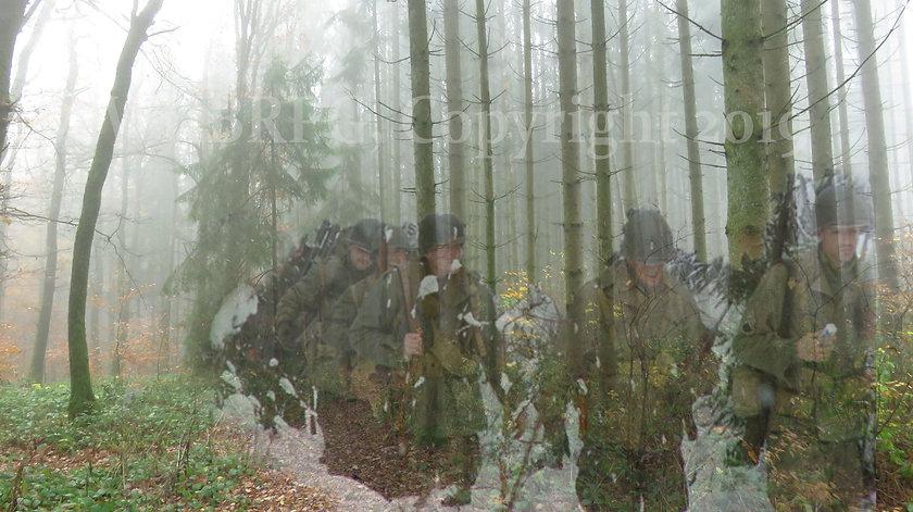 CoFinto woods.jpg